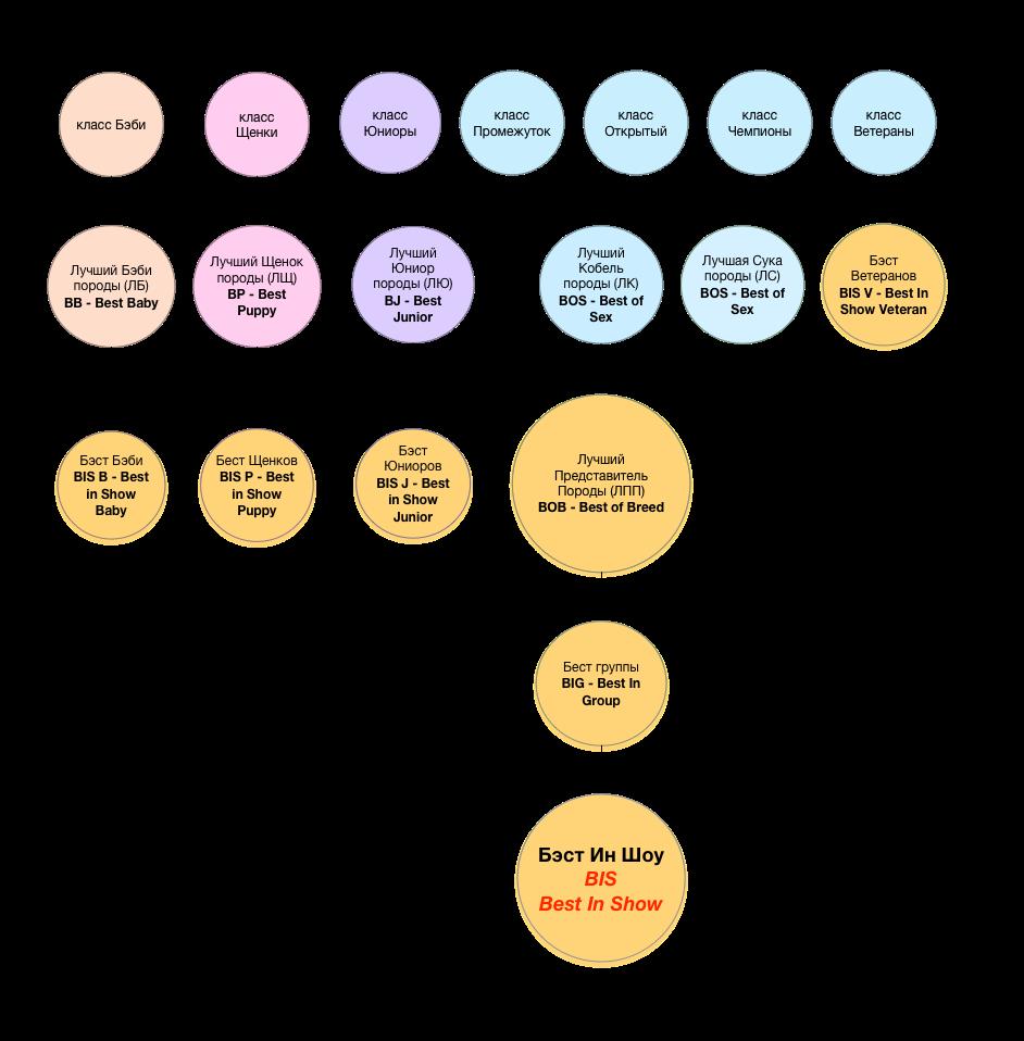 Диаграмма выбора лучших цвергшпицев на выставках